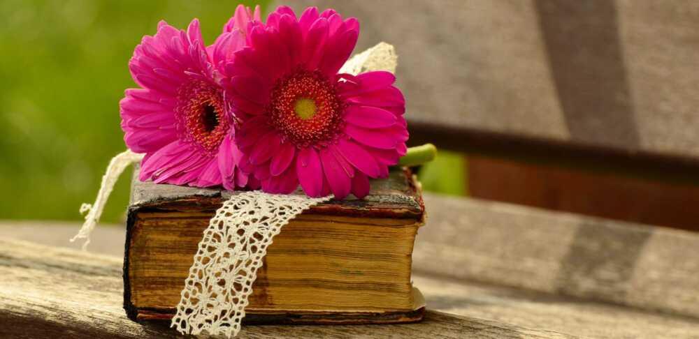 Gerbera Blume auf einer viel gebrauchten Bibel